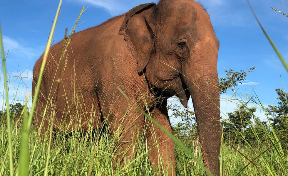 Foto: Santuário de Elefantes Chapada dos Guimarães
